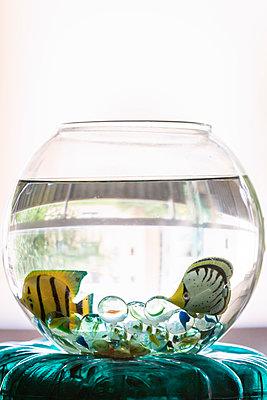 Toy aquarium with plastic fish - p1418m1571876 by Jan Håkan Dahlström