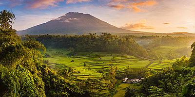 Sidemen valley, Rendang, Karangasem Regency, Bali, Indonesia. Paddy fields with Gunung Agung (Mt Agung) volcano at sunrise. - p651m2007250 by Marco Bottigelli