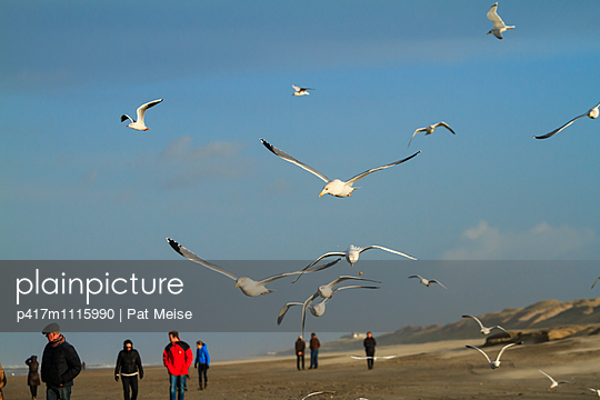 Gull - p417m1115990 by Pat Meise