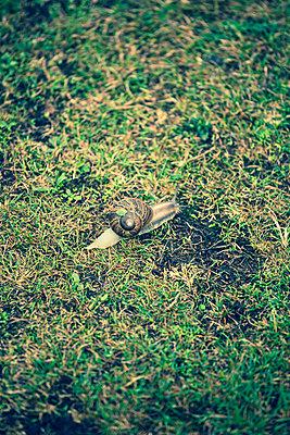 Schnecke im Gras - p432m854541 von mia takahara