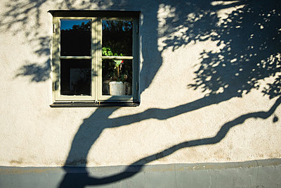 Window and shadow of tree on the wall - p1418m1572108 by Jan Håkan Dahlström