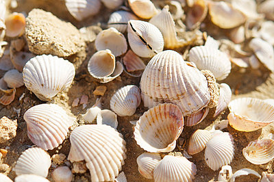 Shells on the beach - p8850008 by Oliver Brenneisen