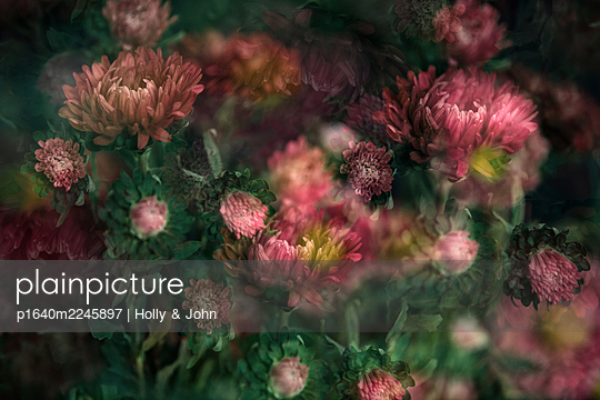 Chrysanthemum, blurred view - p1640m2245897 by Holly & John