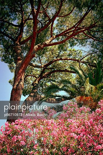 Park in Rom - p56710973 von Alexis Bastin