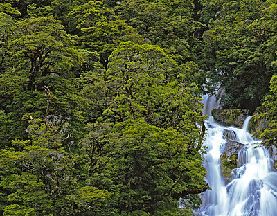 Waterfall in rainforest - p1016m792601 by Jochen Knobloch