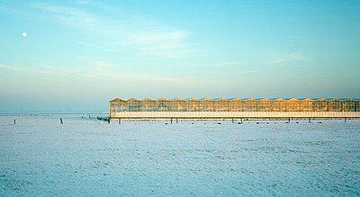 Winter, Brabant, Netherlands - p1132m1020447 by Mischa Keijser