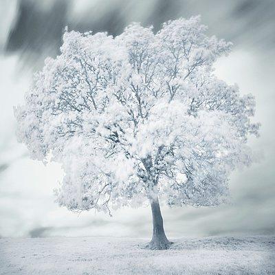 White tree - p1137m932518 by Yann Grancher