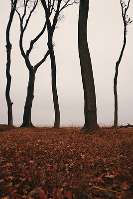 Dead trees on the waterfront, Baltic Sea - p1696m2296512 by Alexander Schönberg