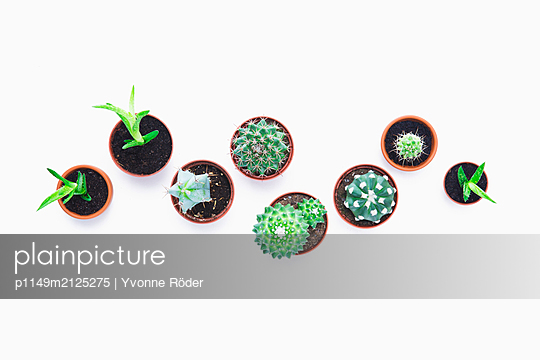 Cacti and succulents - p1149m2125275 by Yvonne Röder