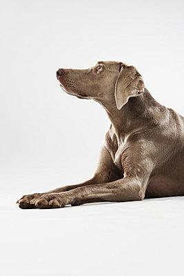 Hunting dog - p4030481 by Helge Sauber