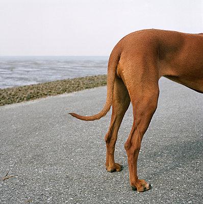 Hund am Meer - p8660040 von aKampmeyer