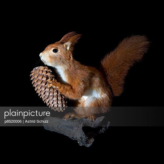 Eichhörnchen - p8520006 von Astrid Schulz