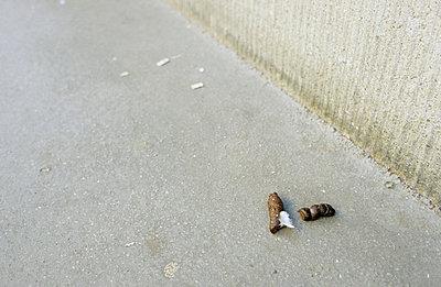 Hundekot - p3050062 von Dirk Morla