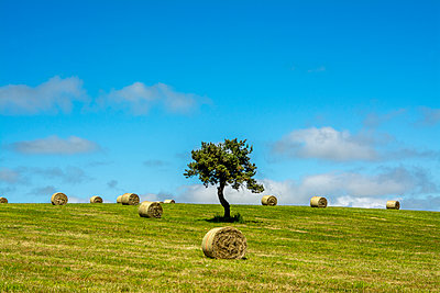 Bales of hay in the field - p813m1159509 by B.Jaubert