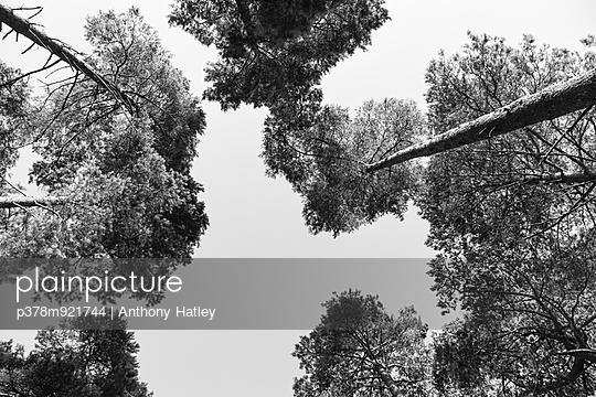 p378m921744 von Anthony Hatley