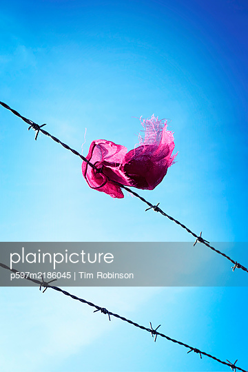 Piece of torn pink cloth caught on barbed wire - p597m2186045 by Tim Robinson