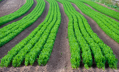 p1403m1490707 von Farm Images