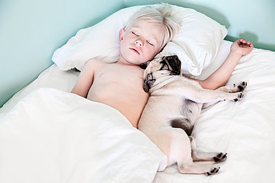 Boy sleeping with pug - p312m1211248 by Sara Winsnes
