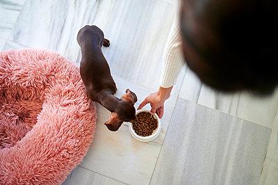 Woman giving food to dog at home - p300m2256465 by Kiko Jimenez