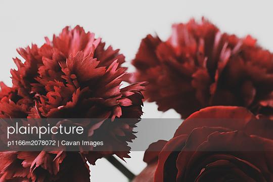 Red flowers - p1166m2078072 by Cavan Images