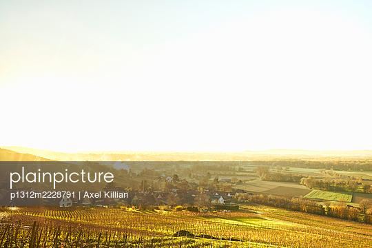 Germany, Vineyard in autumn - p1312m2228791 by Axel Killian