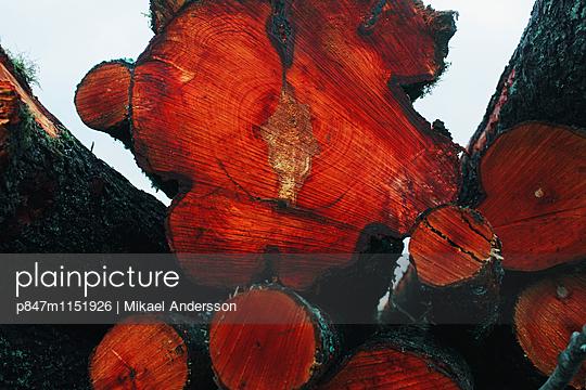 p847m1151926 von Mikael Andersson