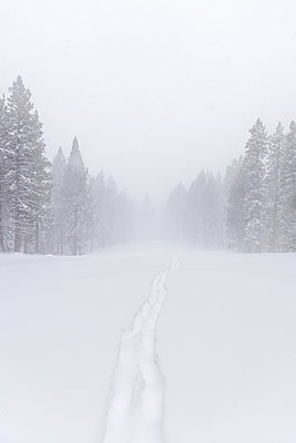 Verschneiter Nadelwald im Nebel, Kalifornien, USA - p756m2253160 von Bénédicte Lassalle