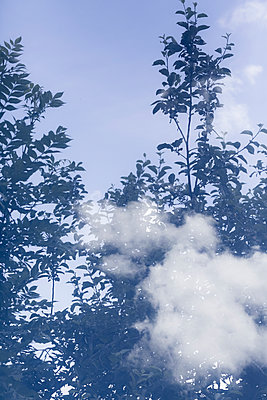 Double exposure with clouds and trees - p1682m2260739 by Régine Heintz