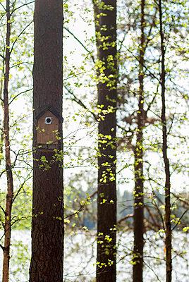 Spring - p971m911941 by Reilika Landen