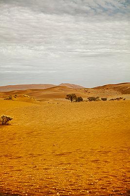 Desert landscape  - p1248m1159867 by miguel sobreira