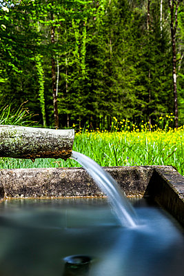Bregenz Forest - p248m1028088 by BY
