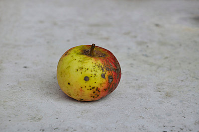 Close up of rotten apple - p300m718753f by Axel Ganguin