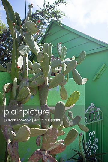 Großer grüner Kaktus vor grünem Haus - p045m1584362 von Jasmin Sander