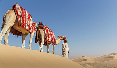 Bedouin leading two camels in desert, Dubai, United Arab Emirates - p429m1021603f by Lost Horizon Images