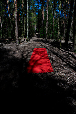 Red carpet - p1212m1134666 by harry + lidy