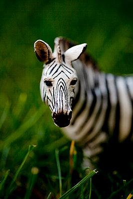 Zebra in the grass - p4451374 by Marie Docher