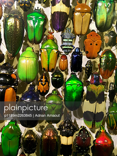 Insects - p1189m2263845 by Adnan Arnaout