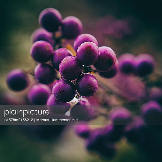Violette Stunde - p1578m2158212 von Marcus Hammerschmitt