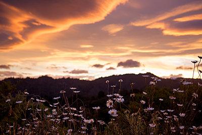 Blumenwiese - p1308m1136805 von felice douglas