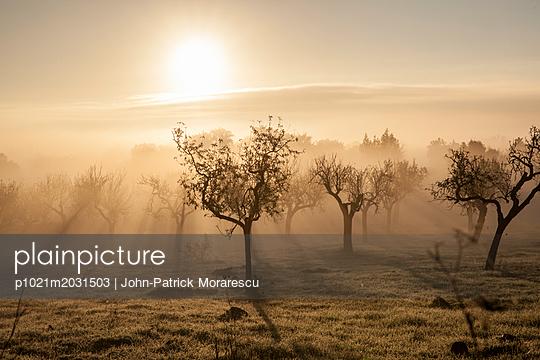 Plantage im Gegenlicht - p1021m2031503 von MORA