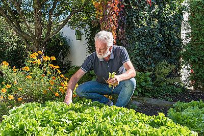Gartenarbeit - p954m2022559 von Heidi Mayer