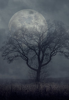 Supermoon at night against tree in the fog - p1280m2100901 by Dave Wall