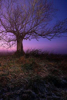 Blattloser Baum im Sonnenuntergang - p1057m2142806 von Stephen Shepherd