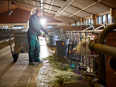 Female farmer giving milk to calves in cow house on a farm - p300m2166547 by Christian Vorhofer