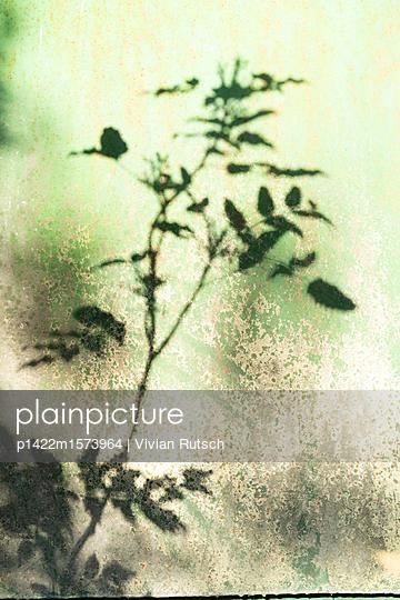 Planzen Schatten - p1422m1573964 von Vivian Rutsch