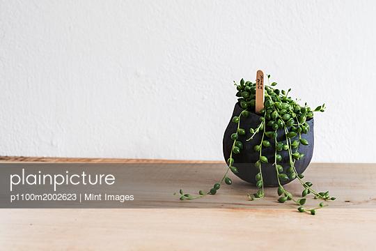 p1100m2002623 von Mint Images