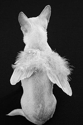 Vogelhündchen - p1543m2116774 von Sophia Snadli