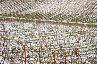 Weinanbau in Frankreich - p2651086 von Oote Boe