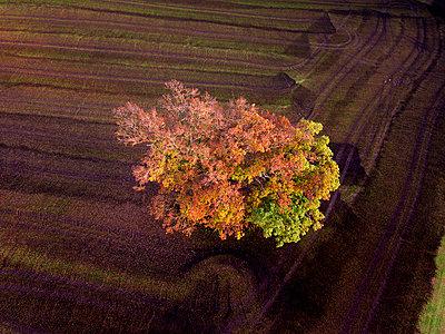 Germany, Bavaria, Fuerstenfeldbruck, Beech Forest in autumn - p300m1537291 by Gerald Nowak