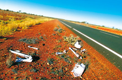bones by the road (australia)   - p5673516 by Philippe Létang